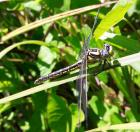 Anjou Environnement:  Un été pour profiter des merveilles de la nature