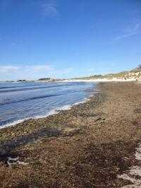 Les algues vertes en décomposition sur la plage de Tréompan Ploudalmézeau
