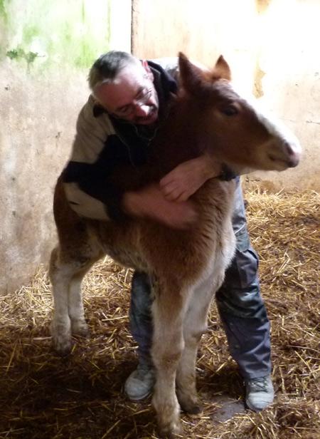 Paulo avec un jeune poulain arrivé au pré il y a quelques jours