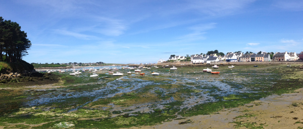 Les algues vertes dans le port de Portsall