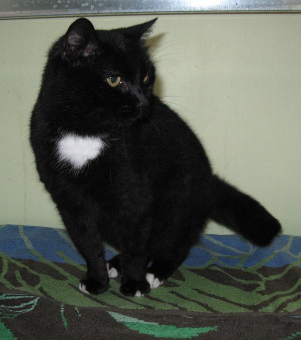 La petite chatte noire née en 2008 est sage comme une image.