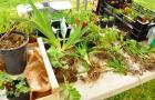 Guérande : Troc plantes