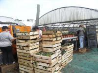 330 000 plants neufs sont utilisés chaque année.