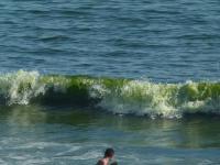 Algues Vertes au plus fort de la chaleur le 24 juillet