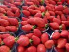 Chez Patrick les fraises sont de retour