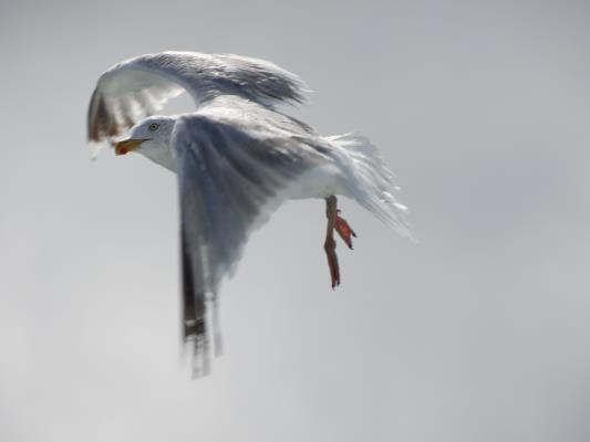 decouvrir les oiseaux du bord de mer
