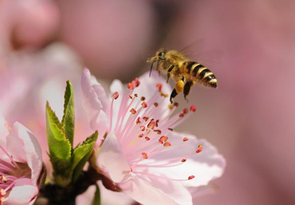 Un plongeon au cœur de la vie des abeilles.