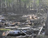 Le bois de Saint-Lyphard.