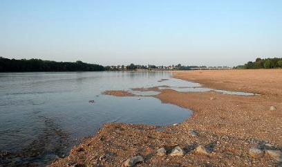 Maine-et-Loire: Huit chiens meurent après une baignade dans la Loire