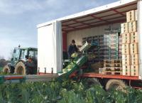 0,18 euro le chou-fleur  pour 1,80 euro prix moyen en août dans le commerce