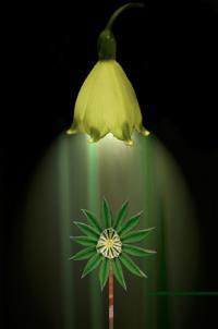 Végétal Autrement Objectif Images Trégor